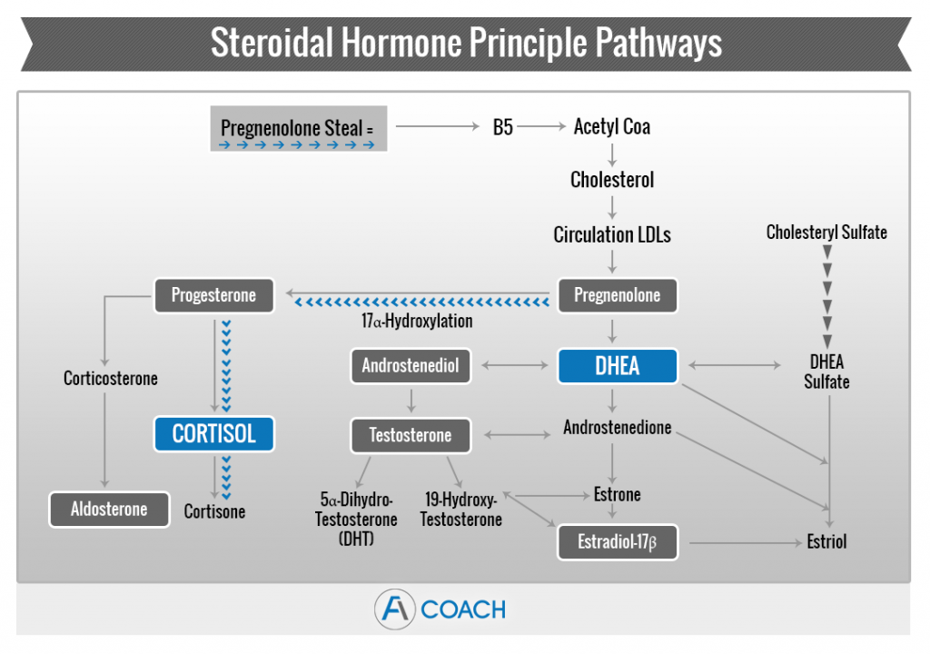Adrenal Fatigue Pregnenolone Steal