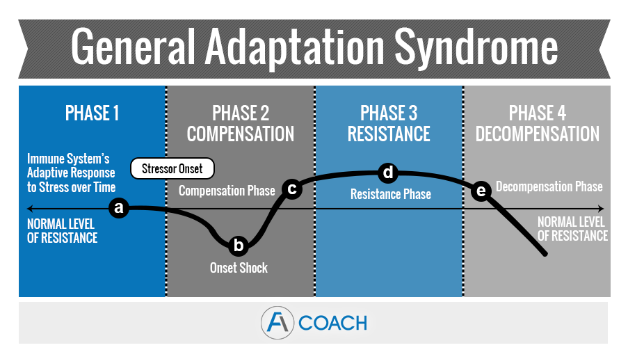 General Adaptation Syndrome: Stages, Definition & Examples