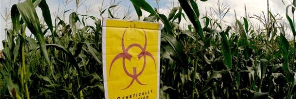 Dangers of GMO Foods